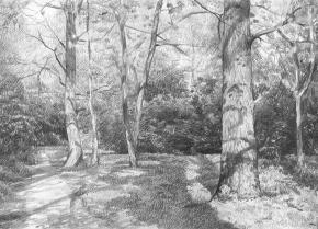 Simon Kozhin. Botanical garden.