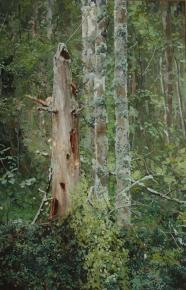 Семён Кожин. Мёртвое дерево.