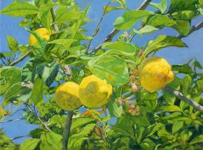 Семён Кожин. Лимоны.