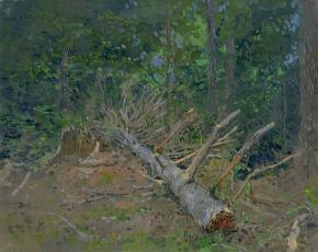 Семён Кожин. Поваленное дерево. Архыз.